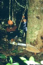 Soja : de l'Amazonie à l'entrecôte. image1
