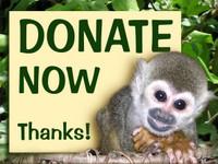 Un don pour sauver la forêt et ses habitants