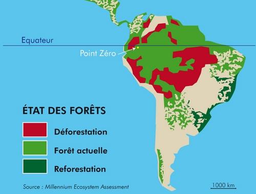 http://www.zero-deforestation.org/img/etat-des-forets.jpg